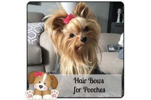 The Pooch Patch