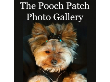 Pooch Patch Pups